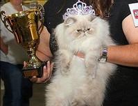 Международная выставка кошек «Королевские кошки Израиля»