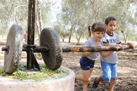 «Шамна»: новые развлечения в новом сезоне сбора оливок